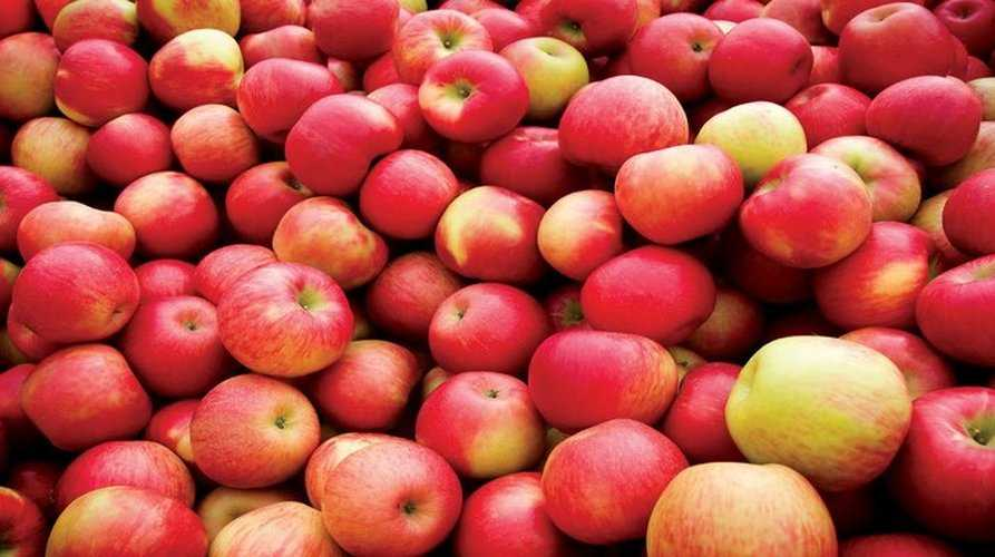 Настойка из яблок — пошаговый рецепт изготовления в домашних условиях с комментариями и фото
