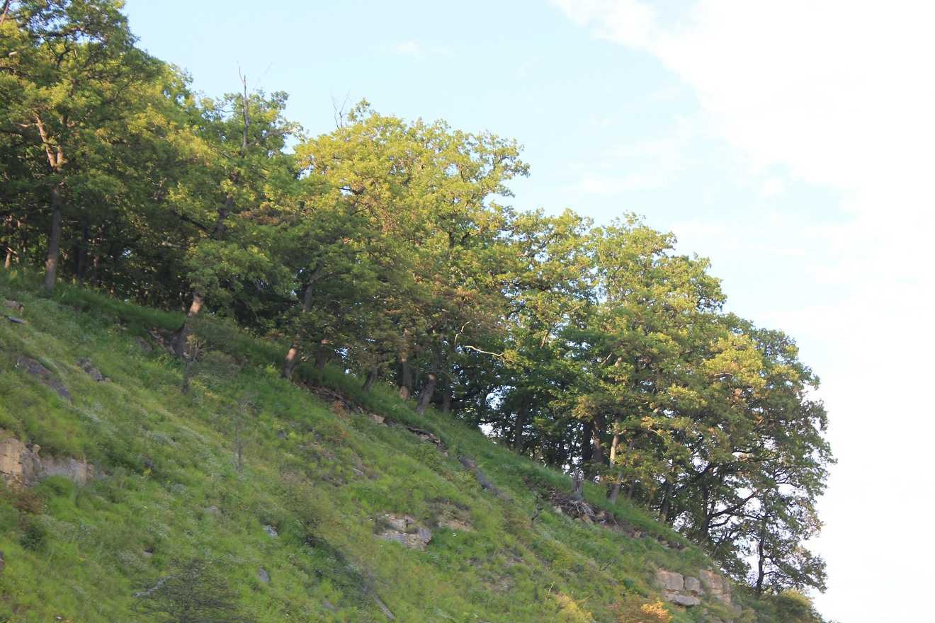 дубовая роща на Кавказе
