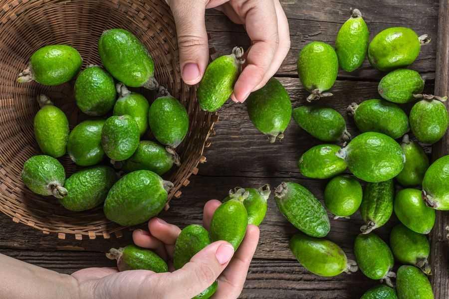 осмотрите плоды