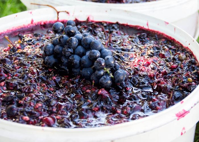 виноградная брага
