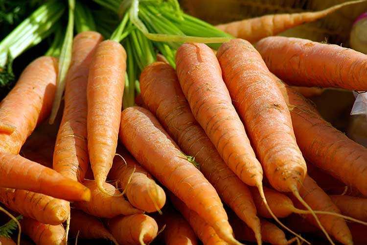 сахарные сорта моркови